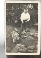52772 ) Unknown Origin Photo Card Boy And Dog - A Identifier