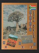 PC SOUTH AFRICA SUID AFRIKA QUIVER TREE NORTHERN CAPE KAROO BOTANICAL GARDENS Z1 - Postcards