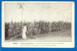 Postcard BRAZIL BRASIL SÃO PAULO CAMPINAS Farmer & Sugar 1910 - Unclassified