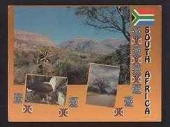 PC SOUTH AFRICA SUID AFRIKA LOWVELD MPUMALANGA BOABAD  BIRD EAGLE KRUGER PARK Z1 - Postcards