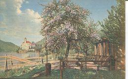 Schönbühel - Partie An Der Dampfschifflände (001658) - Wachau
