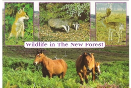 WILDLIFE OF THE NEW FOREST, HAMPSHIRE, ENGLAND. UNUSED POSTCARD Ak7 - Non Classés