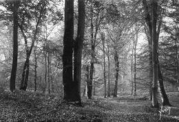 """FONTAINEBLEAU - La Forêt Matinée D'automne Au Verso Cachet Colonie De Vacances Du """"Chantier"""" à Recloses Par Ury - Fontainebleau"""