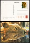 1999 - HUNGARY - LION National Geographic - STATIONERY - POSTCARD - Not Used - Big Cats (cats Of Prey)
