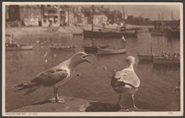 Telling Him Off, Seagulls At St Ives, Cornwall, 1947 - Postcard - St.Ives