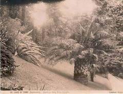 * Foto Grandi Lago Di Como 1875 Giardini Villa Carlotta - Photographs