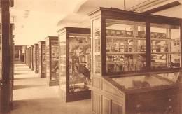 BRUXELLES - Université - Faculté Des Sciences - Zoologie : Vue Prise Au Musée - Onderwijs, Scholen En Universiteiten
