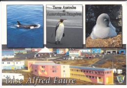T.A.A.F        BASE ALFRED  FAURE          (EDIT  CARLITEX) - TAAF : Terres Australes Antarctiques Françaises