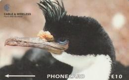 Falklands Is. - King Cormorant  - 229CFKA - Falkland Islands