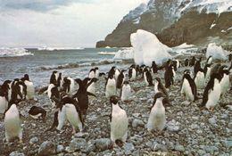 Antarctica - British Antarctic Territory - Cartes Postales