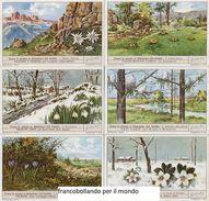 Chromo Liebig Sang. 1477 ITA Come Le Piante Si Difendono Dal Freddo ANNO 1949 - Liebig