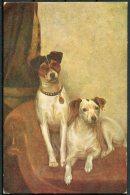 1934 Latvia Dogs Orient Postcard Marsheni - Latvia