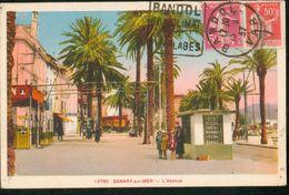 L'Avenue - Sanary-sur-Mer