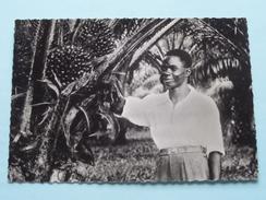 Régimes De Palmier à Huile - Cameroun () Anno 19?? ( Zie Foto's Voor Details ) ! - Cameroun