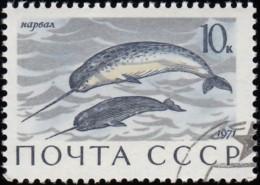 RUSSIA - Scott #3884 Monodon Monoceros / Used Stamp - 1923-1991 URSS