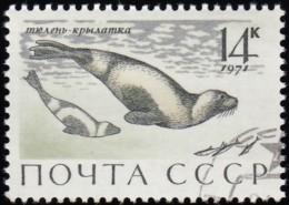 RUSSIA - Scott #3886 Phoca Fasciata / Used Stamp - 1923-1991 URSS