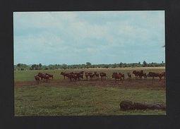 1960sPc AFRICA MOZAMBIQUE GORONGOSA PARK WILD LIFE ANIMAL FAUNA FAUNE MOÇAMBIQUE - Postcards