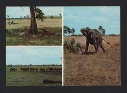 1960ys POSTCARD AFRICA MOZAMBIQUE GORONGOSA PARK WILD LIFE ANIMAL ELEPHANT LIONS - Unclassified