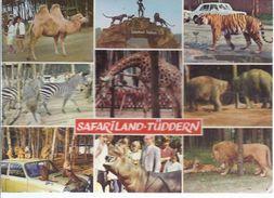 Safariland Tüddern  - Bei Geilenkirchen Nähe Heinsberg **Oran-1-326** - Heinsberg