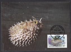 Antigua & Barbuda: Maximum Card, 1987, 1 Stamp, Burrfish, Fish, Sea Animal, WWF Panda Logo (traces Of Use) - Antigua En Barbuda (1981-...)