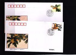 China 1995 Flowers Interesting FDC - 1949 - ... République Populaire