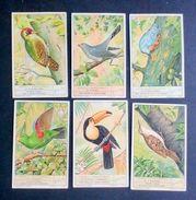 Figurine LIEBIG - Uccelli Rampicanti - Rif.  N° 1365 - Liebig