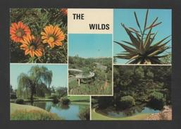 Postcard 1970years SOUTH AFRICA THE WILDS FLORA BOT BOTANIC FLORE SUID AFRIKA - Postcards