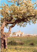 Espagne - Andalousie - Almonte (Huelva) - El Rocio - Exclusiva Expendeduria Nº 1 Nº 8892 - 2929 - Huelva