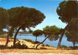 Espagne - Andalousie - Huelva - 1972 - Punta Umbria Laguna De El Portil - Arribas Nº 56 - Ecrite Timbrée - 2954 - Huelva