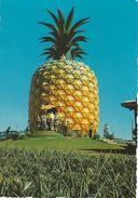 Sunshine Plantation.  Queensland - Australia.  A- 247 - Australia