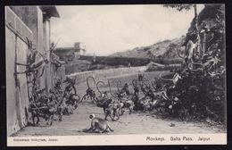 INDIA - JAIPUR -- MONKEY On GALTA PASS - APE - SINGE ( English Occupation Period ) - Inde