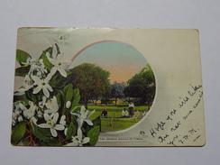C.P.A. TONGA : The Orange Groves Of Tonga, In 1908 - Tonga
