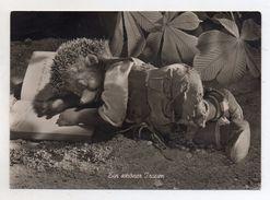 MECKI - Ein Schoner Traum - Viaggiata Nel 1954 - Cartolina Nr. 5 - (FDC6506) - Mecki
