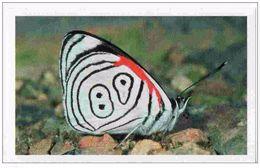 IM036 : Jungle Mania Auchan 2011 N°015 Nymphalidé (papillon) - Unclassified