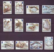 GEO 2004, Young Animals 12v  MNH - Georgias Del Sur (Islas)