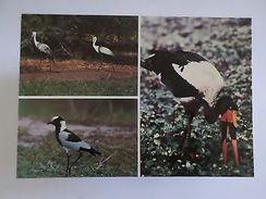 POSTCARD AFRICA MOZAMBIQUE GORONGOSA PARK WILD LIFE ANIMAL BIRDS BIRD  1960s Z1 - Postcards