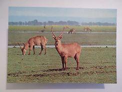 POSTCARD AFRICA MOZAMBIQUE GORONGOSA PARK WILD LIFE WATERBUCK ANIMAL 1960s Z1 - Unclassified