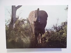 1960s POSTCARD AFRICA MOZAMBIQUE GORONGOSA PARK WILD LIFE ANIMAL ELEPHANT Z1 - Postcards