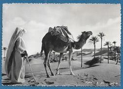 LIBIA LIBYA TRIPOLI ORIENTATION IN THE DESERT 1952 - Libye