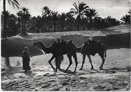 LIBIA LIBYA TRIPOLI 1952 - Libia