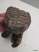 Partie-de-dent-de-mamouth-fossilisee-paleontologie-18-cm-sur-9-cm-poids-1Kg-4 - Archéologie