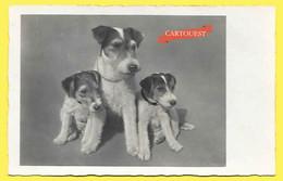 CPA Fox-terrier Femelle Et Chiots - Chiens