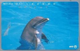 JP.- Japan, Telefoonkaart. Telecarte Japon. NTT. - DOLFIJN - - Dolfijnen