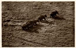 B 2714 - Troupeau   D'Elephants En Pleine Brousse   à  Bangui - Elephants