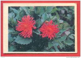 K694 / 1976  FLORA Flower Fleur Blute  - Calendar Calendrier Kalender Russia Russie Russland Rusland - Calendars