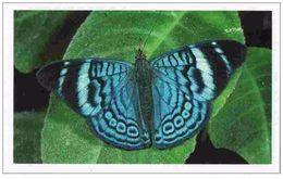 IM039 : Jungle Mania Auchan 2011 N°023 Nymphalidé (papillon Bleu) - Stickers