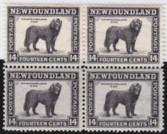 Newfoundland        .   SG   .     216   Bloc Of 4       .      **      . Postfris     .   /   .  MNH - 1908-1947
