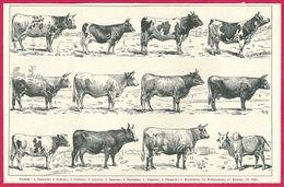 Vaches Larousse 1948 - Vieux Papiers