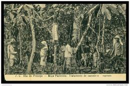 S. TOMÉ E PRÍNCIPE - A.C. Ilha Do Principe - Roça Paciencia: Tratamento De Cacoeiros .   Carte Postale - Sao Tome And Principe