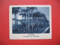 Chromo Image Vignette  Guyane - Plantation De Palmistes  6.5 X 7.5 Cm - Chromos